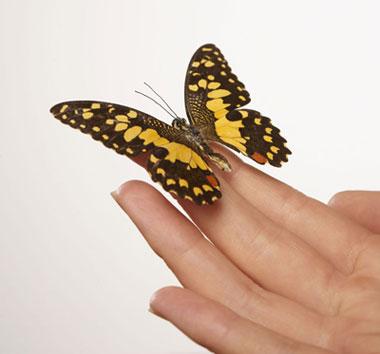 Ефект на пеперутка